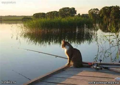 как хочется куда-нибудь на речку с удочкой